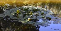 12_-_Gardens_10_-_copie